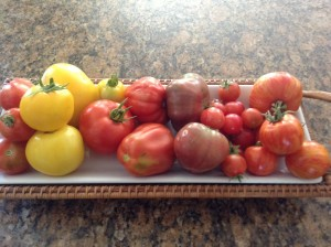 A variety of heirloom tomatoes from the garden