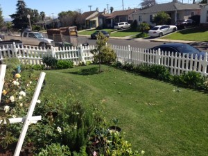 The front yard can combine landscape flowers with edibles like squash, arugula and tomatoes